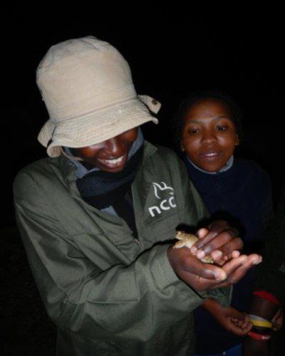Karoo Toad (3)